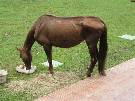 Researchers Closer To Determining Cause Of Equine Grass